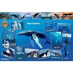Humpback Whale Migrations