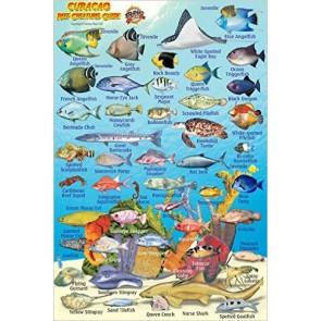 Curaçao Reef Creatures Guide (MiniCard)