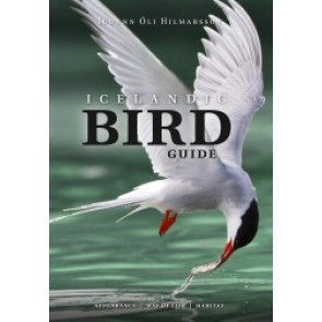Icelandic Bird Guide - appearance | way of life | habitat