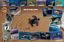 Sea Turtle Life Cycle - Help Sea Turtles Survive