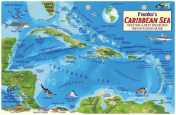 Fish Card Caribbean Sea Dive Sites & Fish ID Card /  Coral Reef Creatures