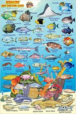 Bonaire Reef Creatures Guide (MiniCard)