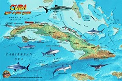 Fish Card Cuba Sea Dive Sites & Fish ID Card /  Coral Reef Creatures