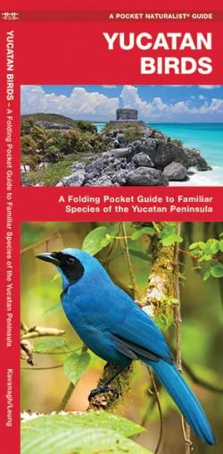 Vogelgids Yucatan Birds