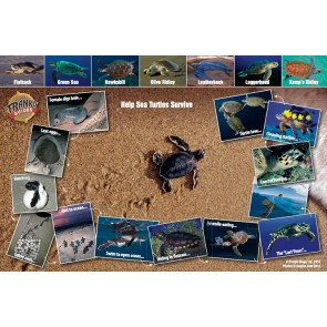 Sea Turtle Life Cycle - Help Sea Turtles Survive