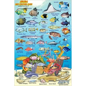 Aruba Reef Creatures Guide (MiniCard)