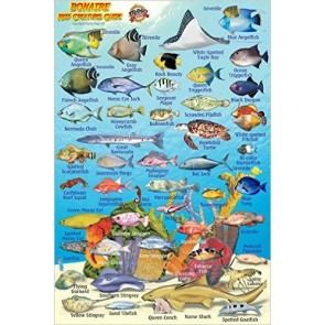 Bonaire Reef Creatures Guide (MiniCard)