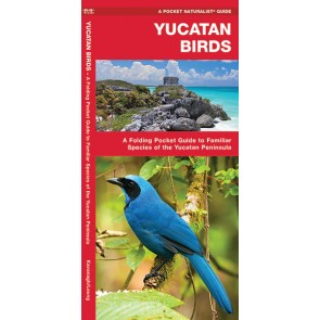 Vogelgids Yucatan Birds (2017)
